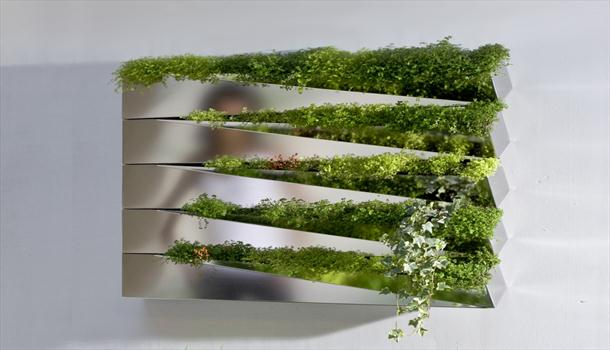 Growing Herbs On A Mirror