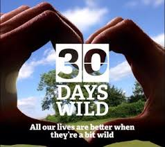Celebrate #30DaysWild This June
