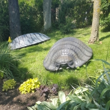 Giant woodlice at Blackgang Chine