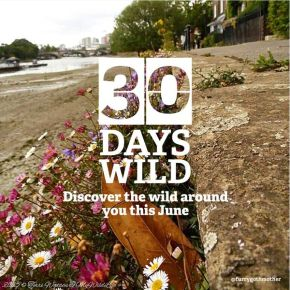 30 Ways to go #30DaysWild in 30 Minutes