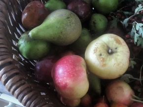 Frugal Friday: Save Money WithNature