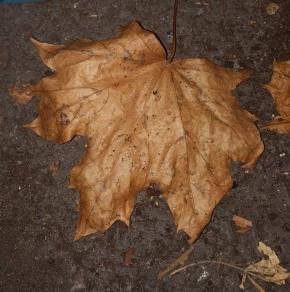 Folklore Thursday: NovemberFolklore