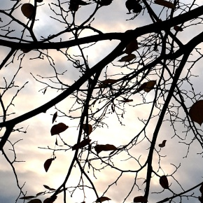 Celebrate Trees for National TreeWeek